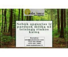 Nebūk apgautas ir parduok mišką už teisingą rinkos kainą!