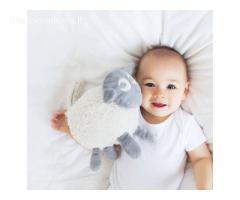 Migdukas- sapnų avinėlis Evanas