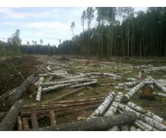 Miško darbai/ Лесные работы